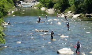 付知川での鮎釣り